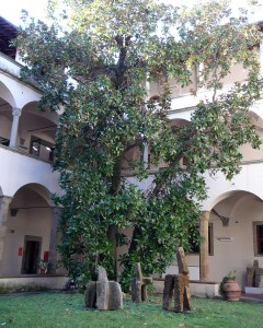 Cloister of the Biblioteca dell'Oblate