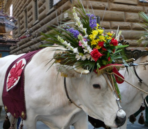 Two White Oxen Bedecked with Flowers Pull the Cart