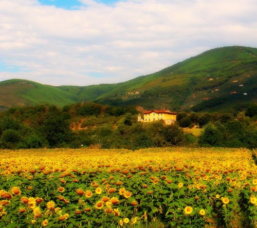 Tuscan Traveler's Fantasy Tuscany Made Reality