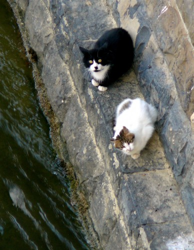 Arnie and Soot near home under Ponte alle Grazie