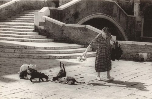 One of the Cat Ladies of Venice (photo from venise-acqua-vite.com)