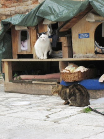 Kitty Condo by San Lorenzo Church (photo by AnnieNC)