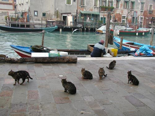 Cats by the Canal (photo from venessia.com)
